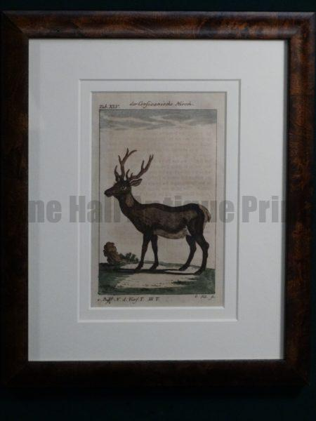 Compte de Buffon Deer Hand Colored Engraving Framed #XLI
