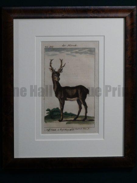 Compte de Buffon Deer Hand Colored Engraving Framed