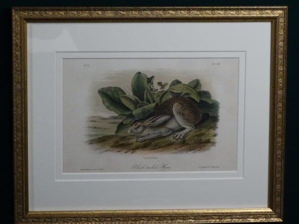 Audubon Black-Tailed Hare, c.1849-1855. $375.