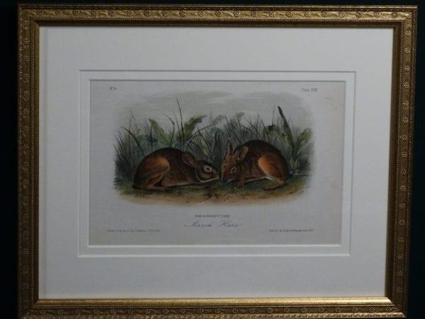 Audubon Marsh Hare, c.1849-1855. $375.