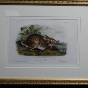 Audubon Swamp Hare, c.1849-1855. $375.