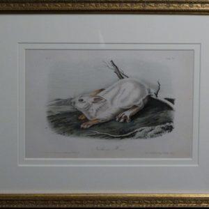 Audubon Northern Hare, c.1849-1855. $375.