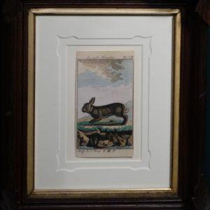 Buffon Rabbit Exquisite Frame c.1765-1804.