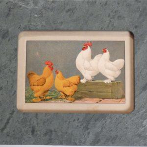Chickens Green Slate #1