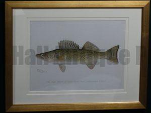 Denton Fish Pike Perch, c.1896-1906. $165.