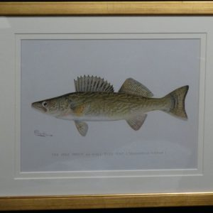 Denton Fish Pike Perch, c.1896-1906. $165.