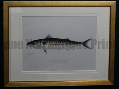 Denton Common Mackerel, c.1896-1906. $165.