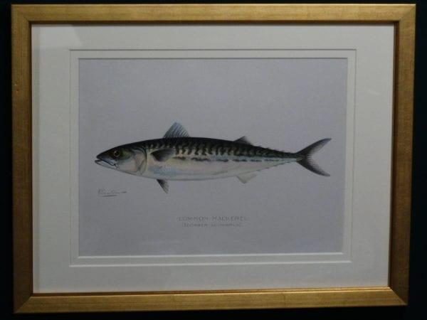 Denton Common Mackerel, c.1896-1906. $165.