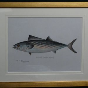 Denton Bonito Framed c.1896-1906.