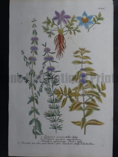 Weinmann Pulegium 838 Sold