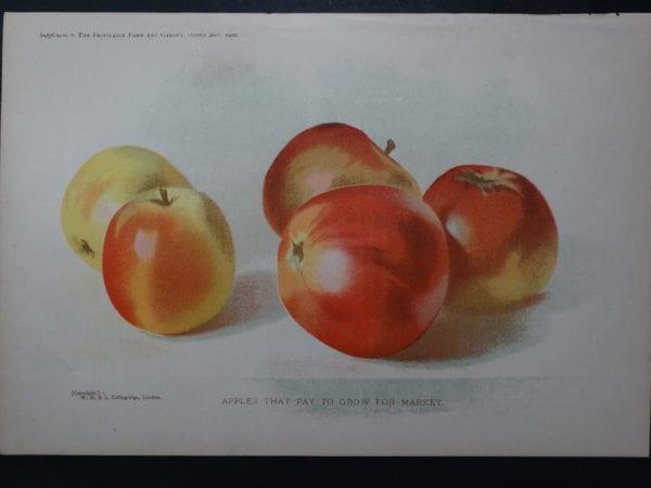 Apples $50