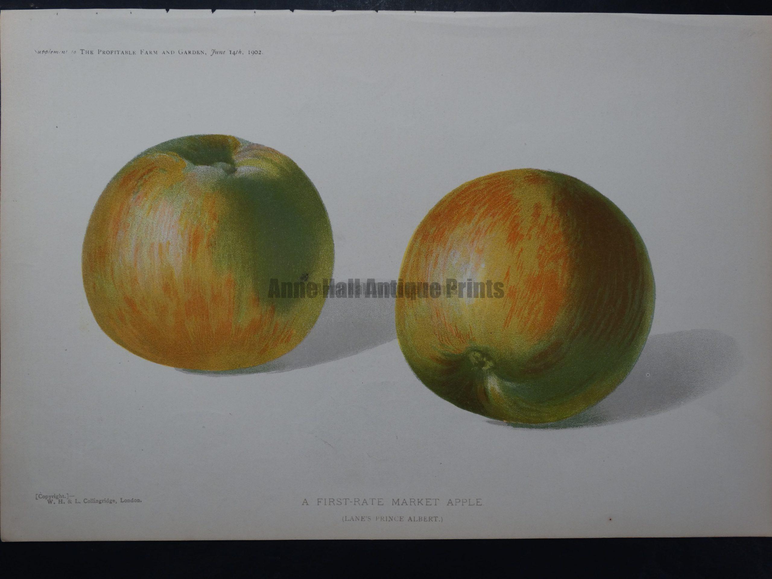 Market Apple $50