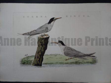 Nozeman Bird Sterna $300
