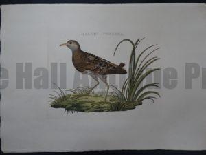 Nozeman Bird Rallus $300