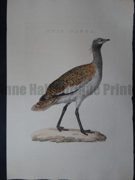 Nozeman Bird Otis $275