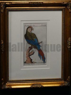 Buffon Green Macaw Parrot FR7. Grune Ara, $225.