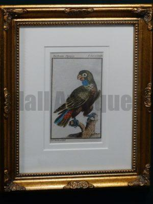 Buffon Green Parrot FR6 Der braune Papagey, $175.