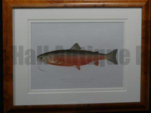 Denton Framed Sunapee Trout