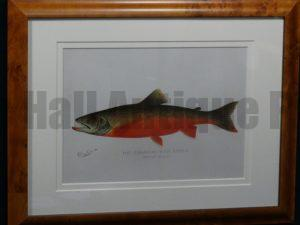 Denton Framed Canadian Red Trout