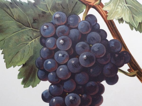 Shop for wine products lithographs and engravings at Anne Hall Antique Prints and feel assured you are buying authentic antique lithographs and engravings.