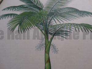 Antique prints of palms