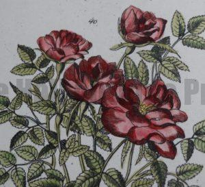 Flora Botany