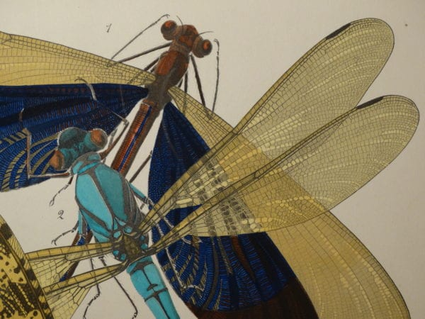 E.A. Seguy Pochoir Papillons & Insectes