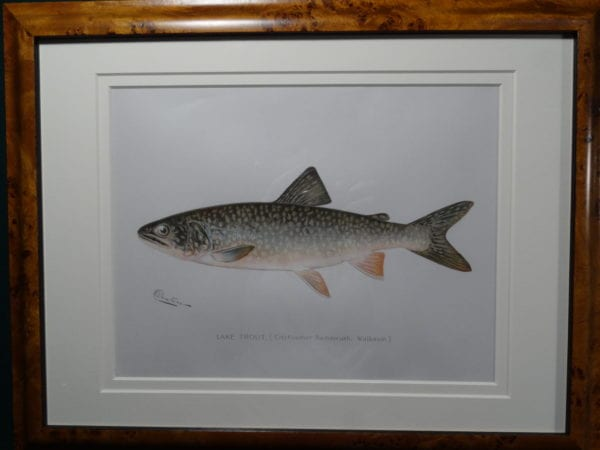 Framed Denton Lake Trout. $300.