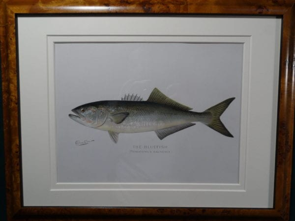 Framed Denton Bluefish