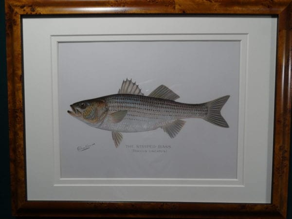 Framed Denton Striped Bass