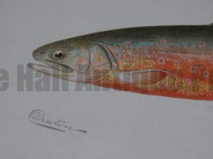 Denton Trout for Fishermans Home Decor