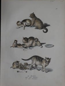 to show the depiction of cats