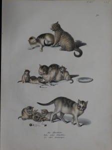 Die Hauskatze, 1856. $225. 0385