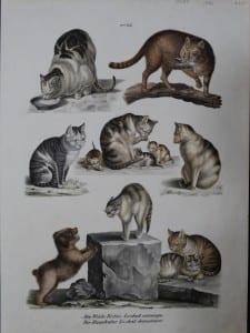 Die Wilde Katze Le chat sauvage, 1856. $175. 0387