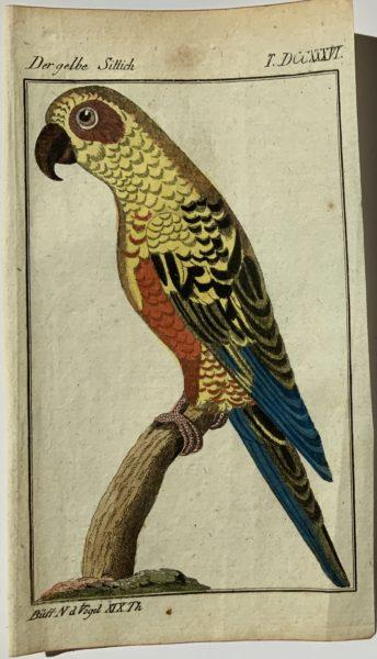 Buffon Parrot 5