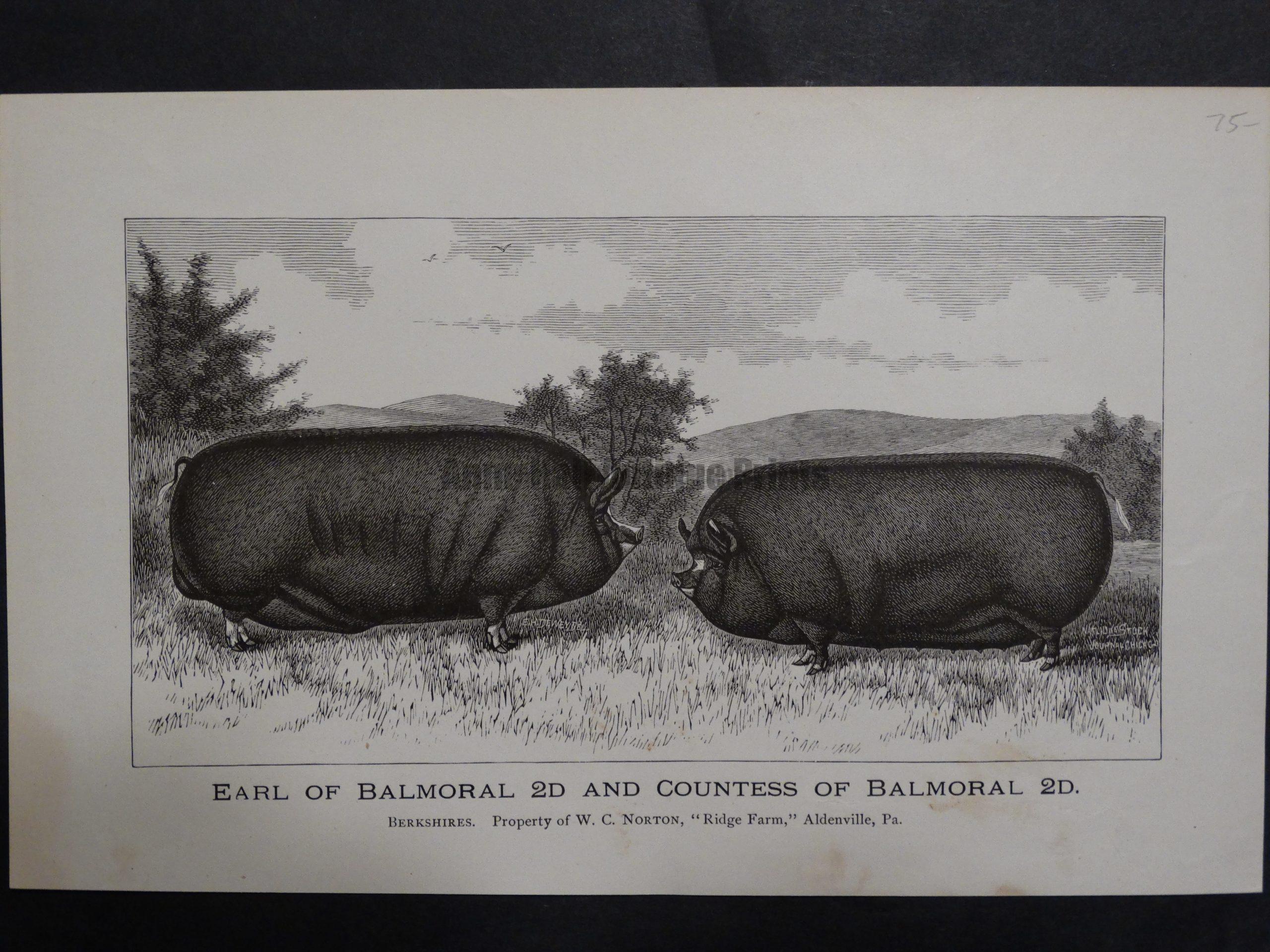 Earl and Countess of Balmoral, c.1885. $75.