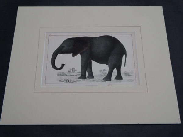 Goldsmith Elephant Engraving 9877 (Matted)