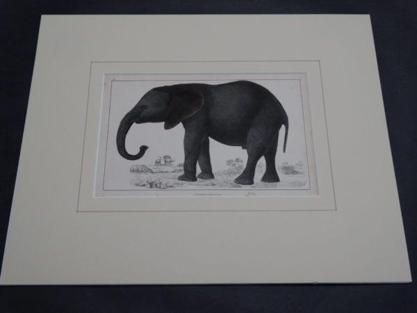 Goldsmith Elephant Engraving 9877 (Matted)