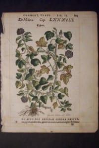 Ephew, 1560. $60.