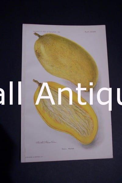 Fruit USDA Cecil Mango