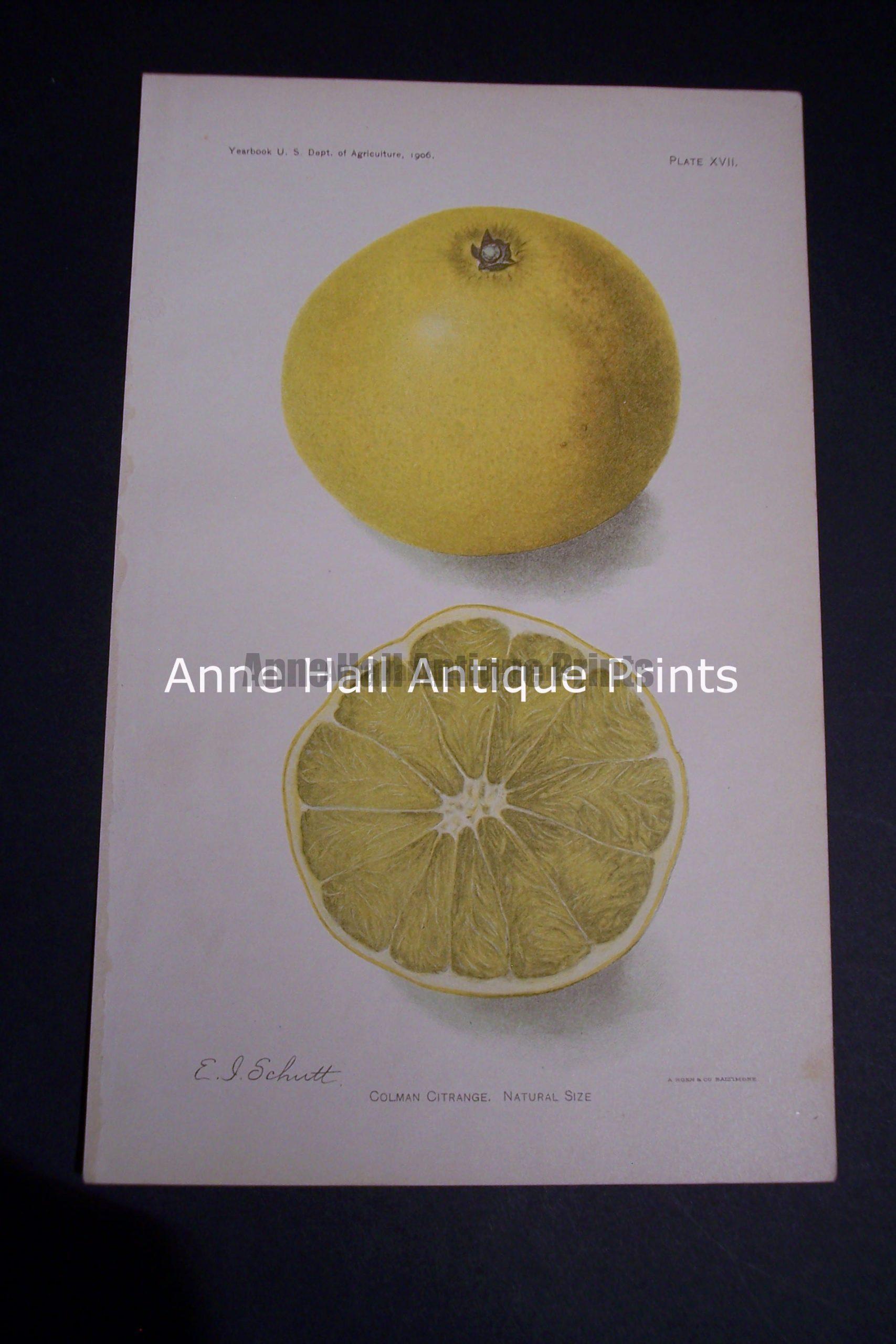 Fruit USDA Coleman Citrange