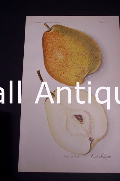 Fruit USDA Douglas Pear