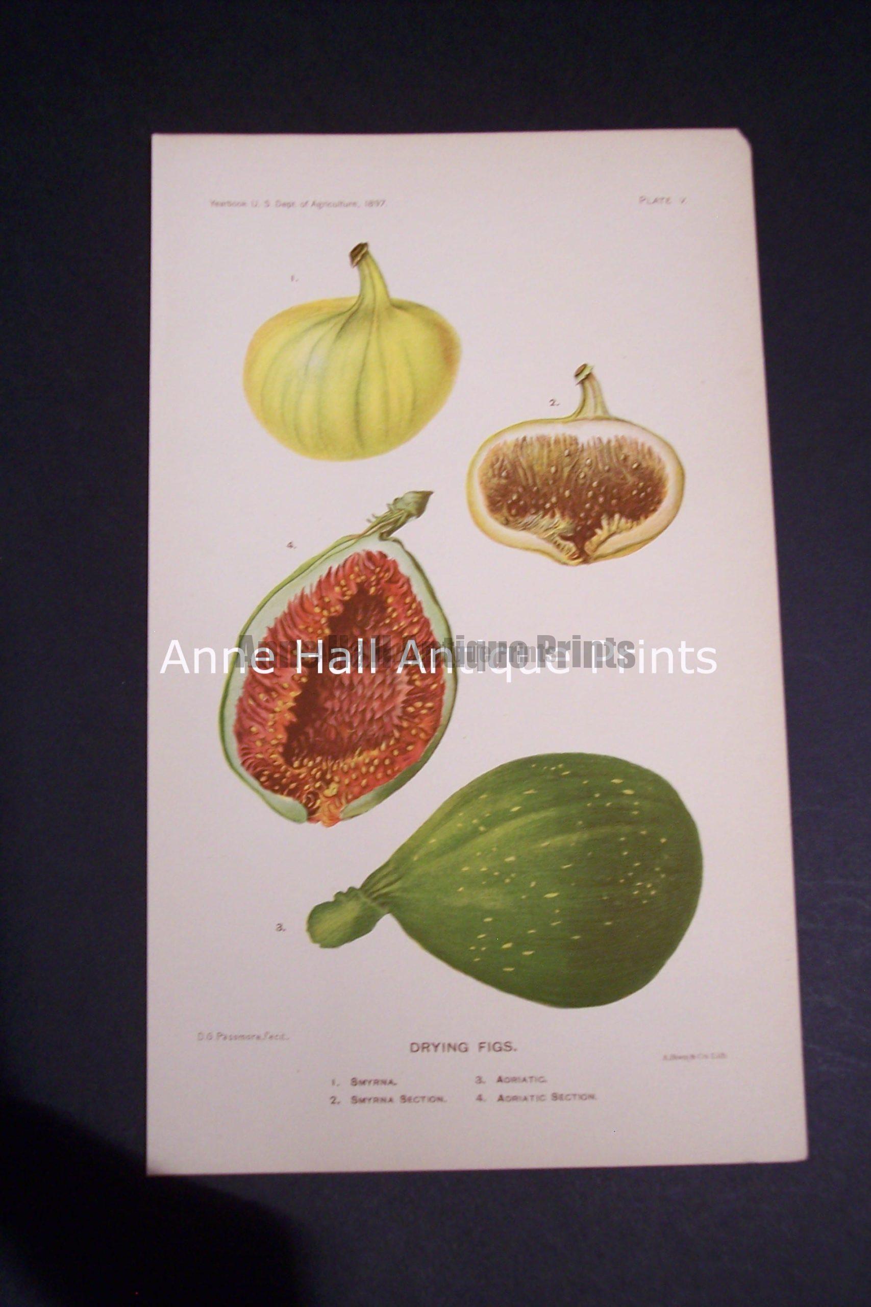 Fruit USDA Drying Figs
