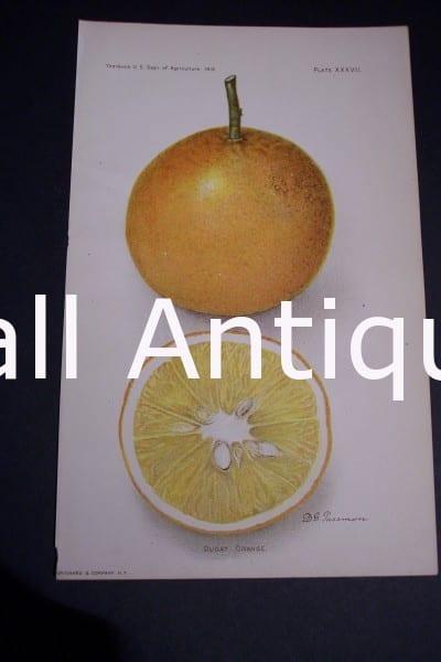 Fruit USDA Dugat Orange