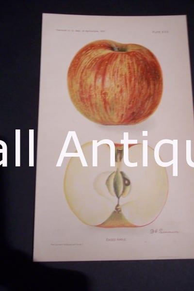 Fruit USDA Ensee Apple