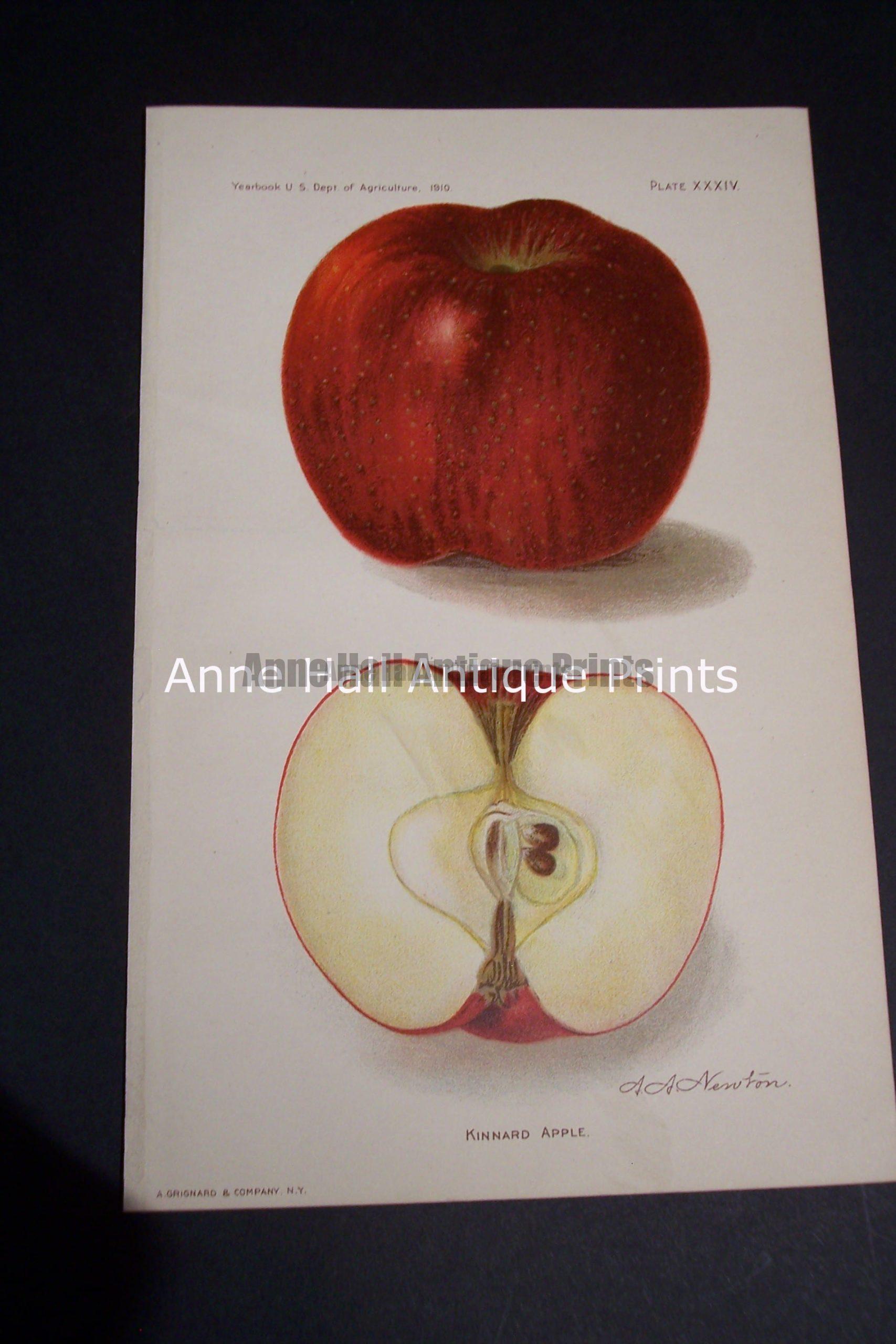 Fruit USDA Kinnard Apple