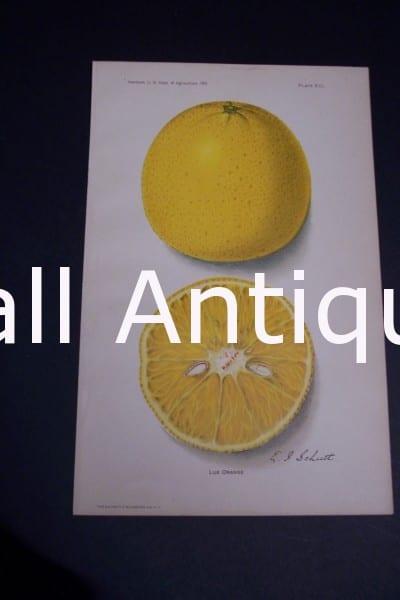 Fruit USDA Lue Orange