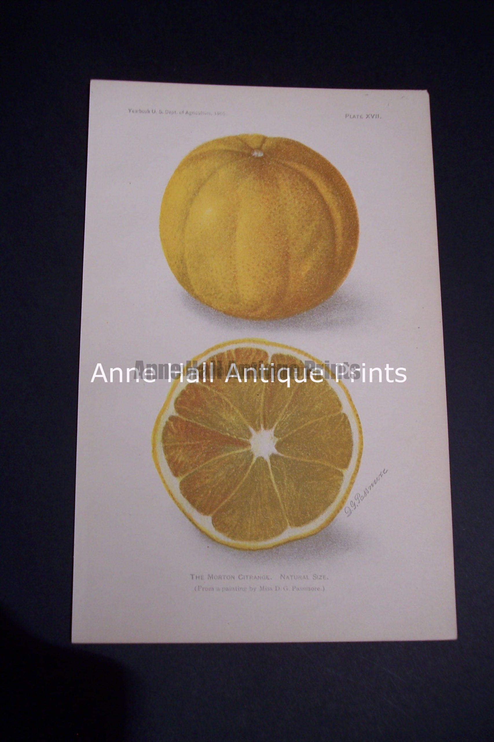 Fruit USDA Morton Citrange