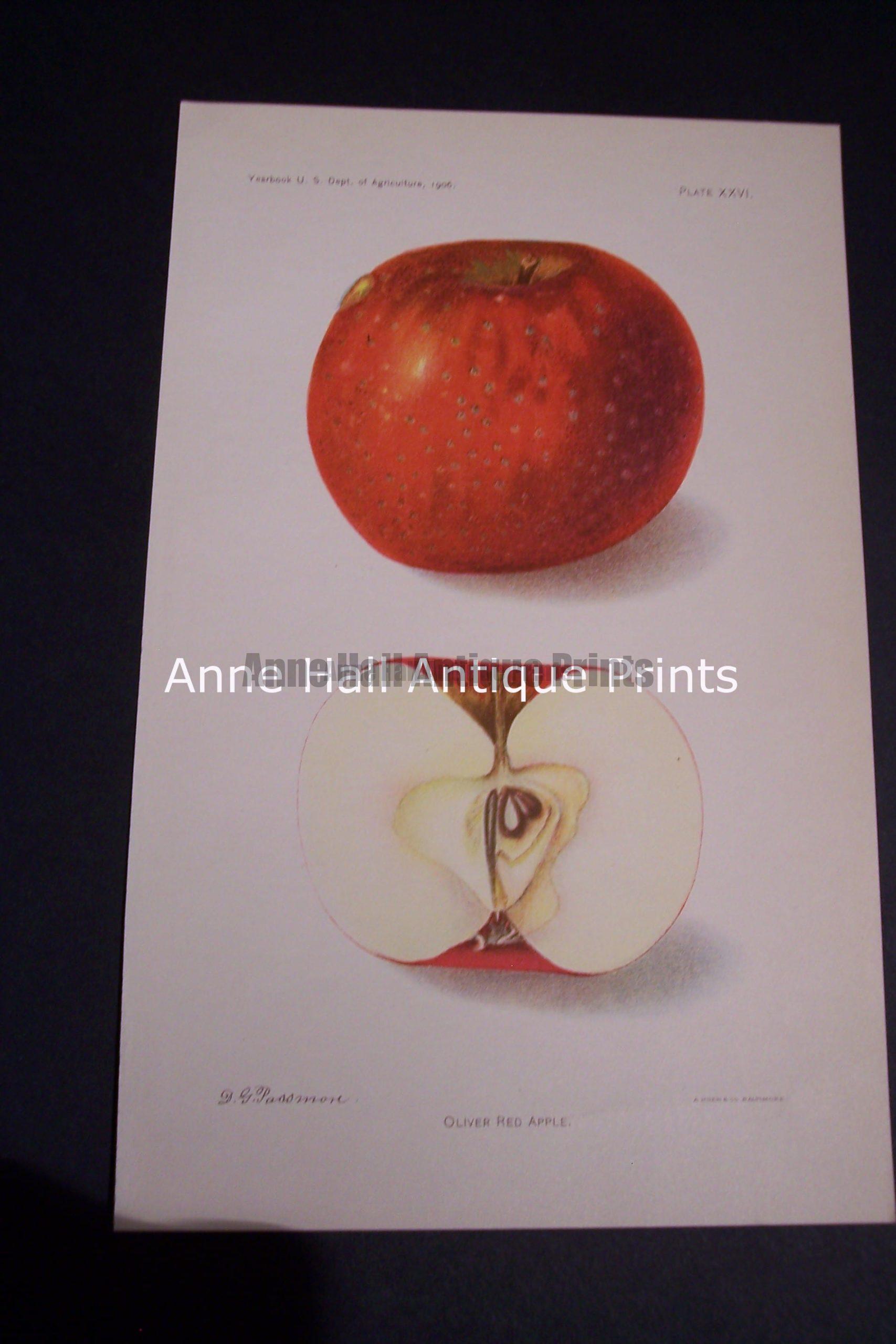 Fruit USDA Oliver Red Apple