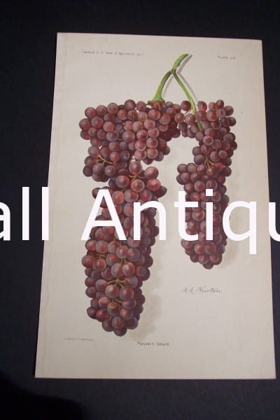 Fruit USDA Panariti Grape